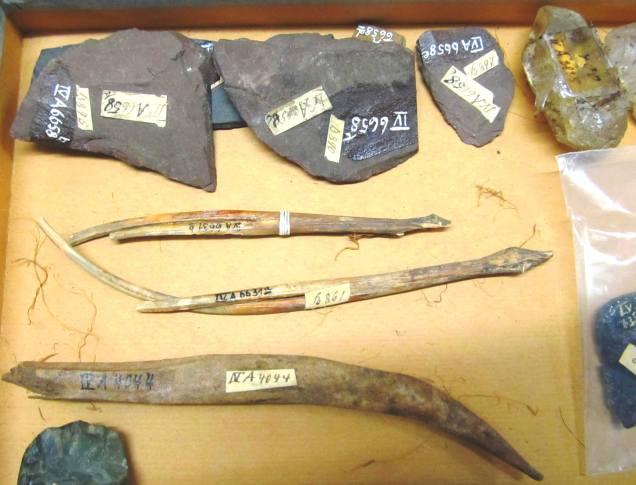 Fish Bones - IV.A. 6631
