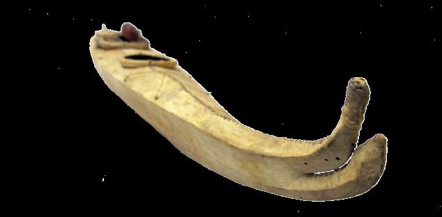 VAN 152